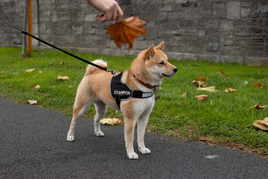 Dogecoin 140% Joke Rally Goes Serious with Perpetual Contract Launch