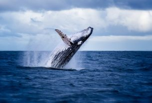 Whales are Accumulating Bitcoin Despite Its Stalling Momentum