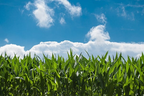 5 of the Best Yield Farming Opportunities For 2021
